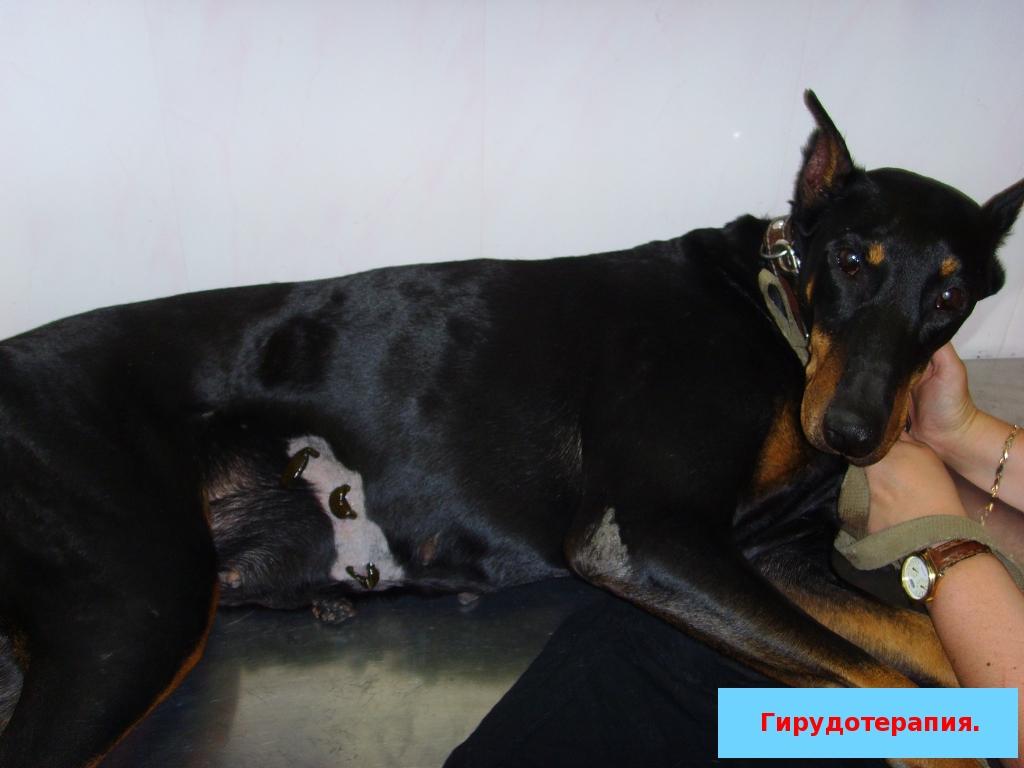 Royal Canin Vet Diet Gastro Intestinal Low Fat